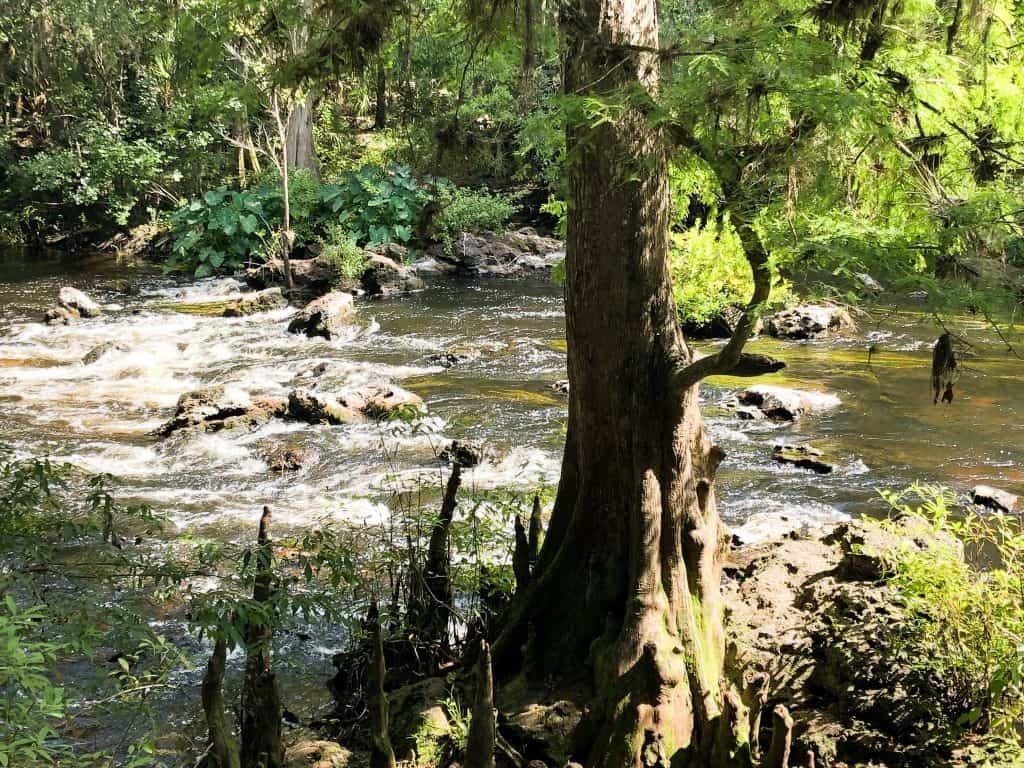 Class II rapids in Florida