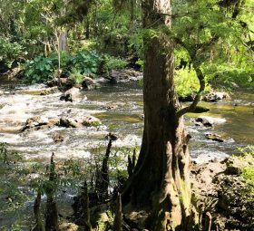 Florida State Parks: #6 Hillsborough River State Park