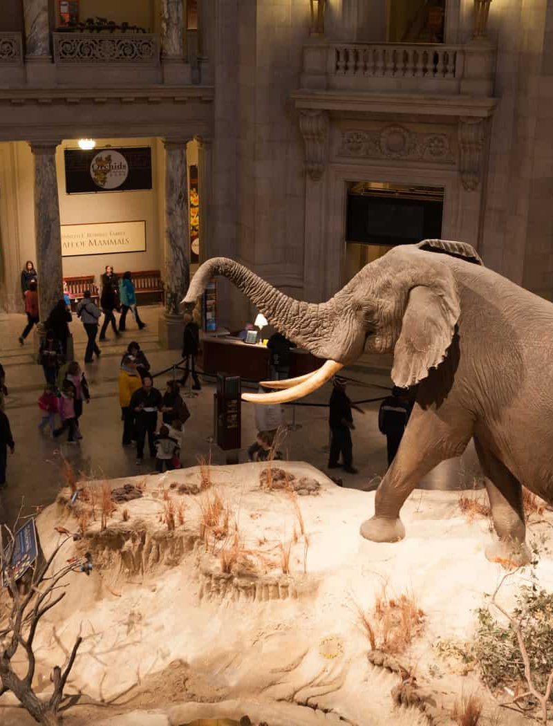 Discover The Smithsonian Museums . . . while watching Night At The Museum