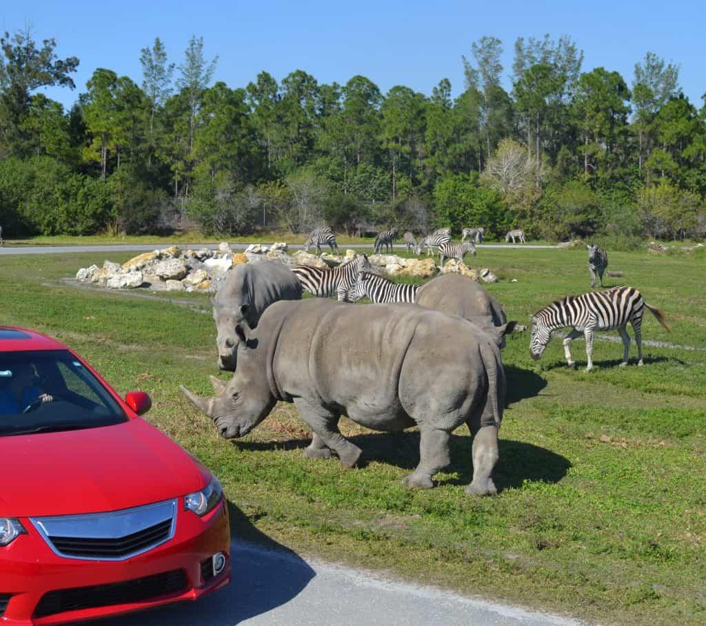 Rhinos at Lion Country Safari, West Palm Beach ,FL