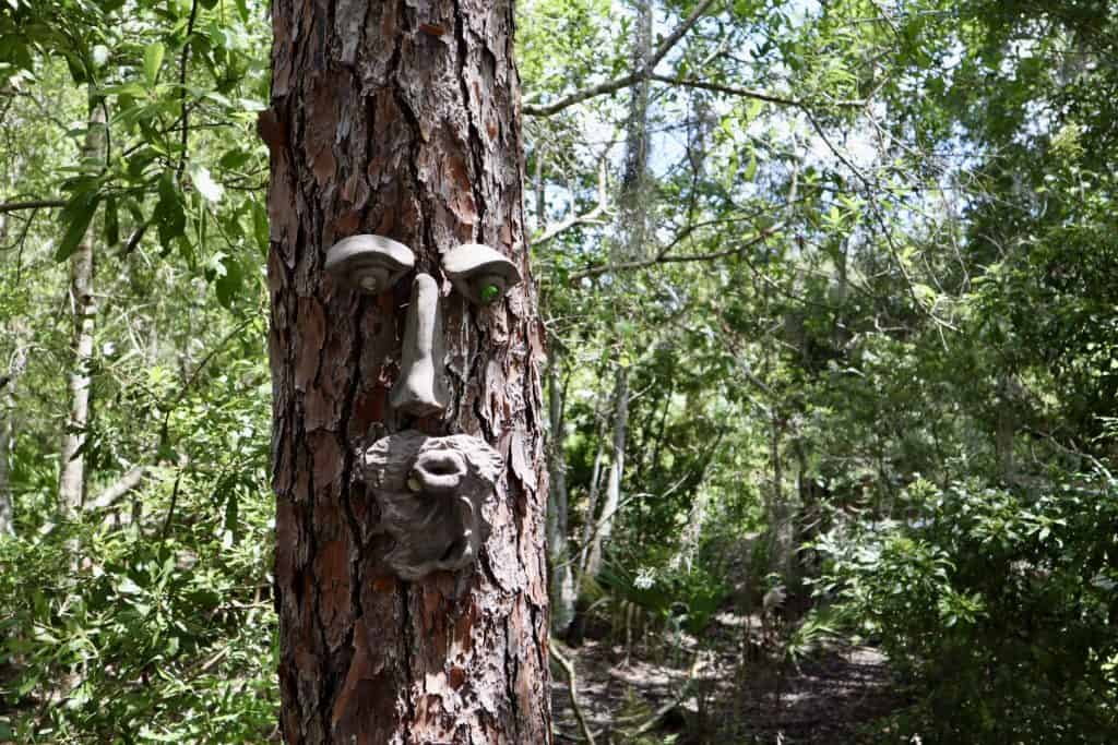 Face in the tree, Florida Botanical Gardens