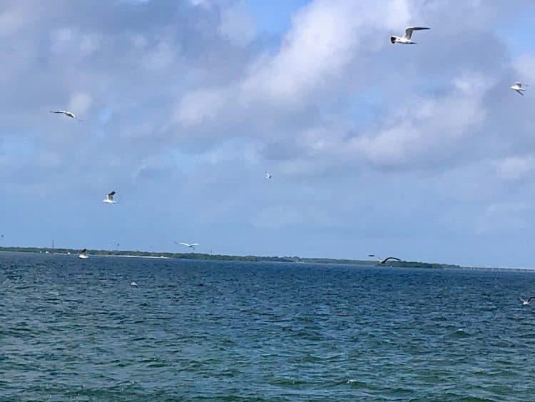 Birds over Gulf of Mexico
